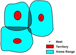 animals territories home range pathwayz
