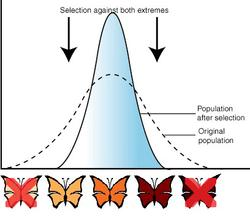 Examples Of Variation In Natural Selection